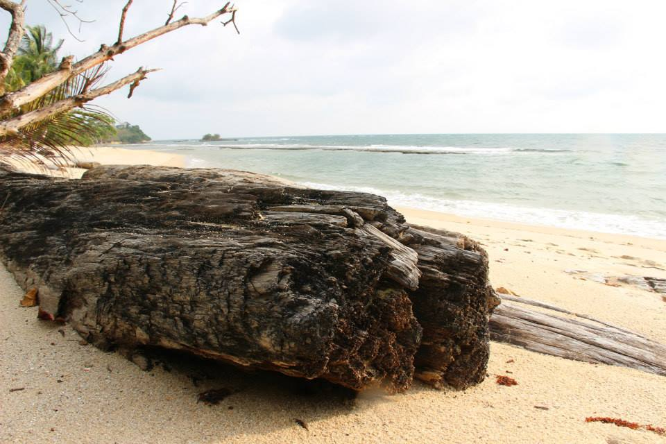 Voyage nature et découverte au Gabon