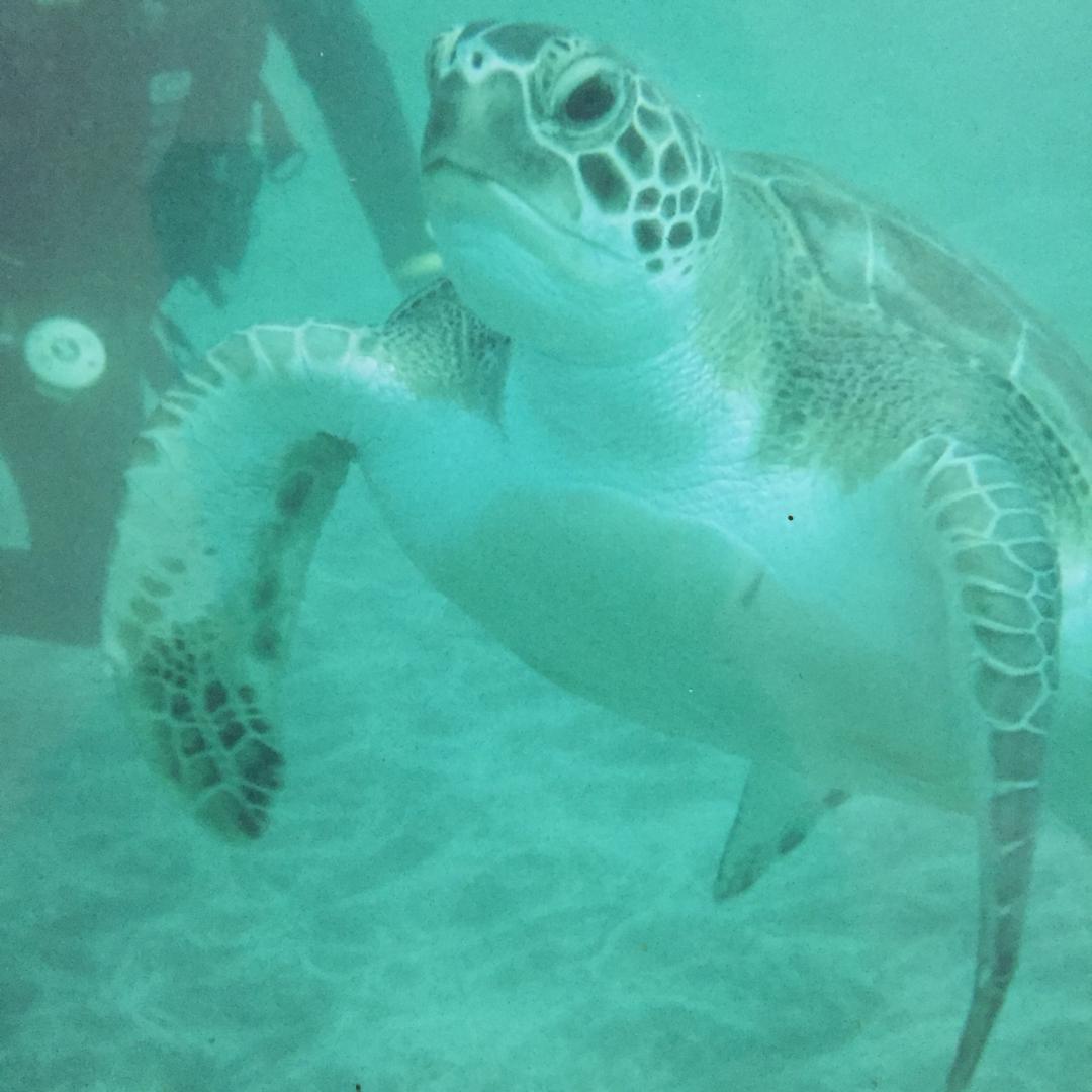 5 raisons de pratiquer la plongée